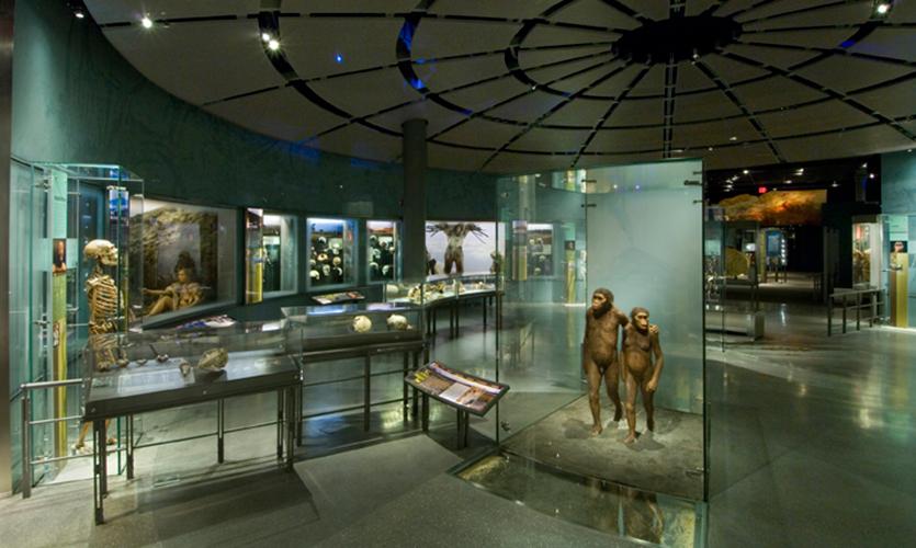 Hall of Human Origins  SEGD