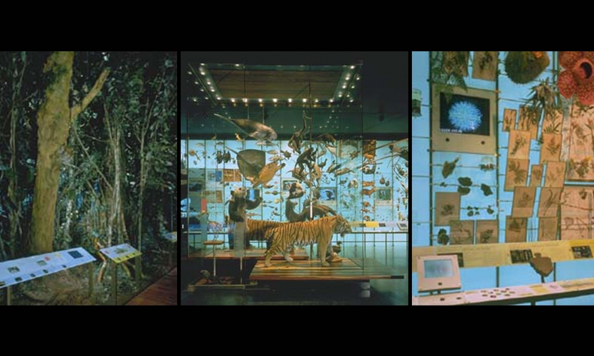 11,000-Square-Foot Hall, Hall of Biodiversity, American Museum of Natural History, Ralph Appelbaum Associates