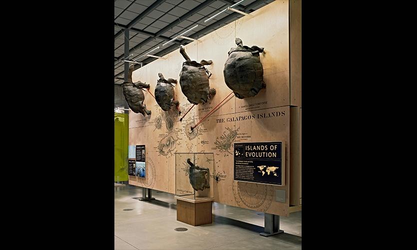 Island of Evolution, California Academy of Sciences Exhibits, California Academy of Sciences, Volume Inc., Cinnabar Inc.