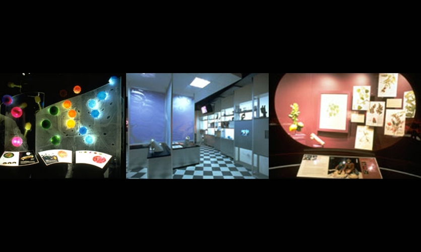 Exhibit Design, Epidemic!, American Museum of Natural History, AMNH Exhibition Department