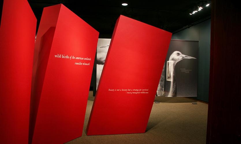 Red Columns, Wild Birds of the American Wetlands, Utah Museum of Natural History, UMNH Exhibits Department