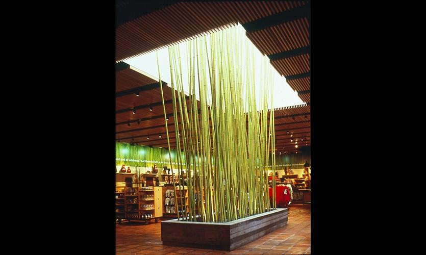 Bamboo Centerpiece, San Diego Zoo Store, The Zoological Society of San Diego, Esherick Homsey Dodge & Davis, Schwartz Architects