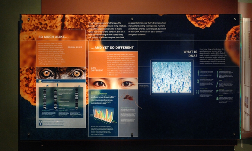 What Is DNA?, Hall of Human Origins, American Museum of Natural History