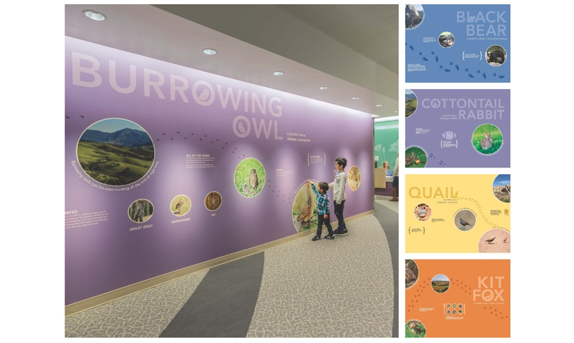 Each patient unit entry includes an educational exhibit with fun facts about an animal ambassador. The eight exhibits are intended to get patients and siblings moving, learning or distracted. (image: owl wall graphics, photo by Emily Hagopian)