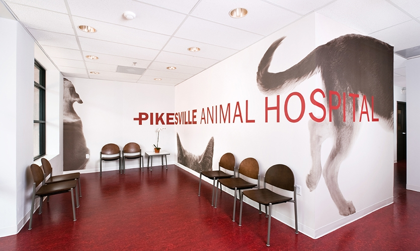 Pikesville animal hospital segd for Veterinary clinic interior design