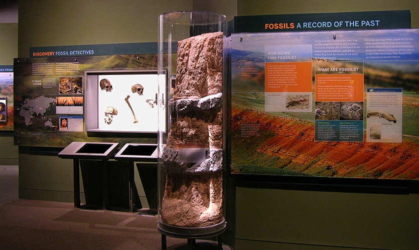 Fossils, Hall of Human Origins, American Museum of Natural History