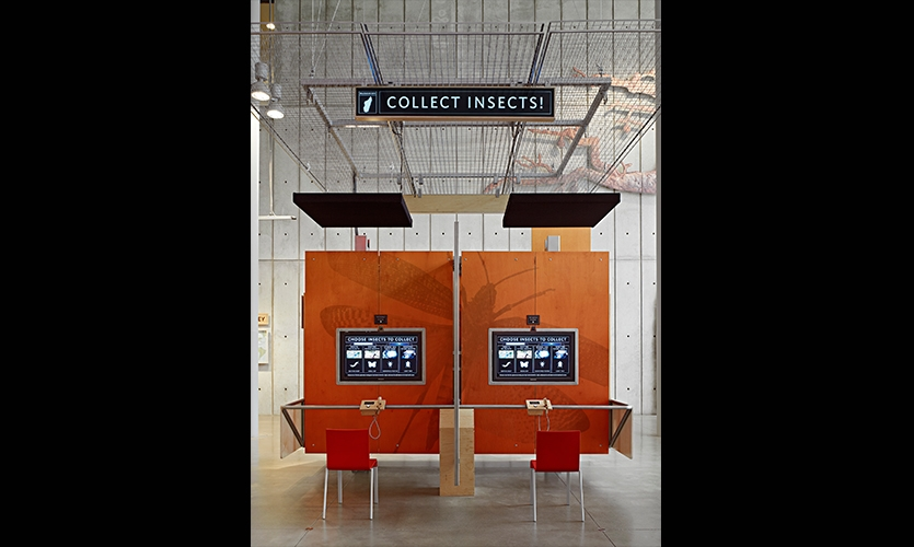 Collect Insects, California Academy of Sciences Exhibits, California Academy of Sciences, Volume Inc., Cinnabar Inc.