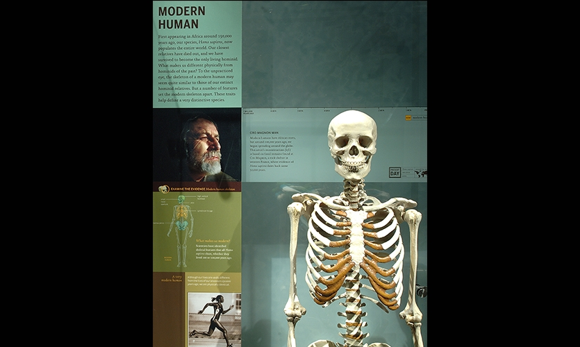 Modern Human, Hall of Human Origins, American Museum of Natural History