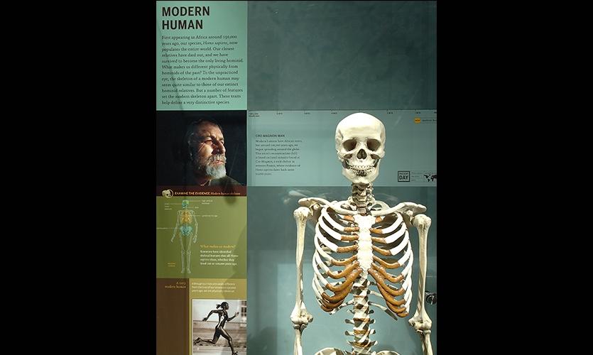 Modern Human, Hall of Human Origins, American Museum of Natural History