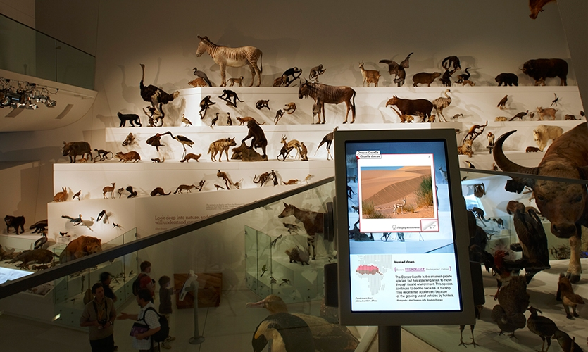 Interactive Touchscreen, Wild: Amazing Animals in a Changing World, Melbourne Museum, MV Studios, Museum Victoria