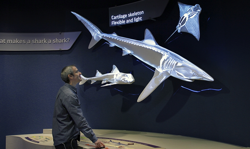 This interactive allows guests to explore the skeletal system of sharks.