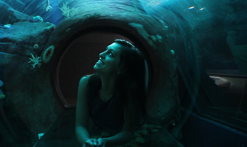 A tunnel allows guests a shark's eye view.