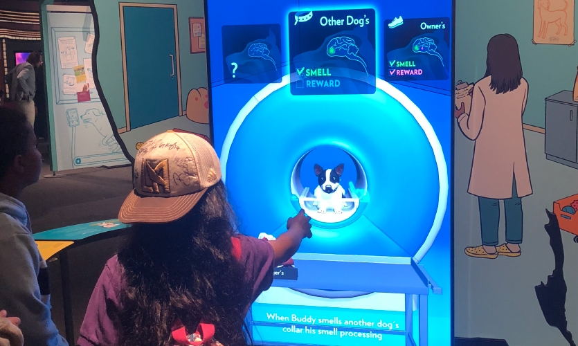 Unified Field created a virtual dog lab based on the work of Neuroscientist Dr. Greg Burns. (Image: girl uses interactive screen)