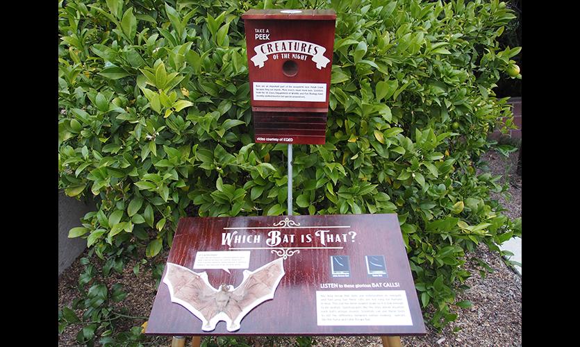 Figure 15. Bat Nature Intervention