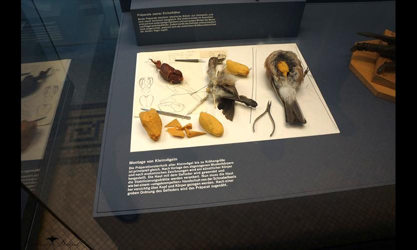 Figure 8. Berlin Wall Public Exhibit, Berlin Natural History Museum: Taxidermy Exhibit