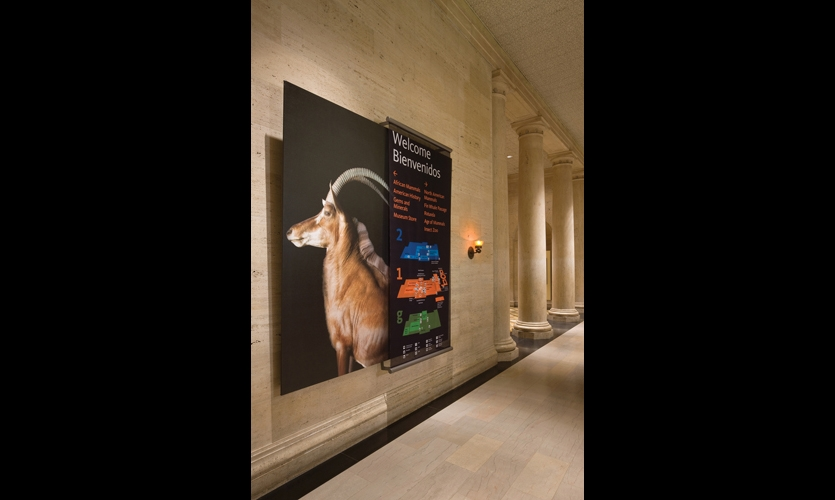 "To provide flexibility as the museum renovates and moves exhibits during the next five years, wayfinding signs are layered. The ""hero panels"" (specimen photos) are semi-permanent, while the top layer of architectural mesh carries wayfinding information that can be changed as needed."