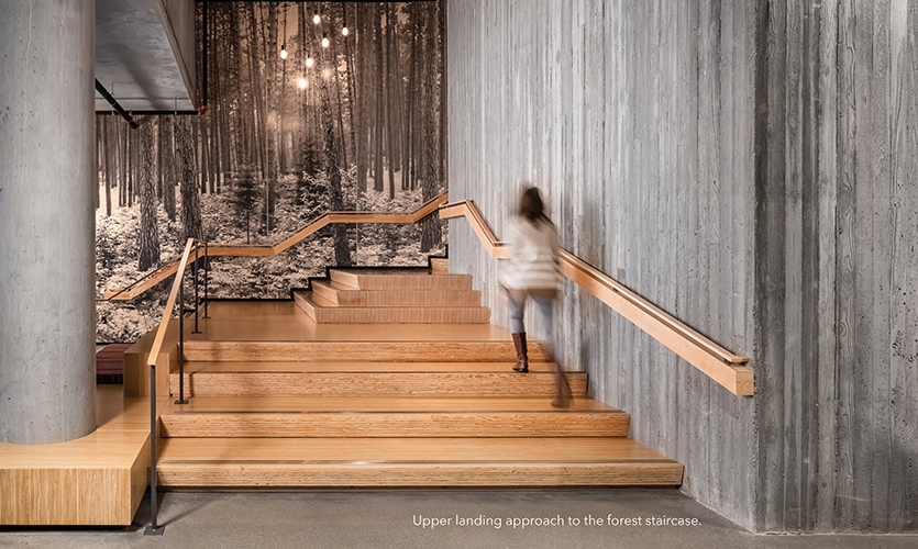 The main staircase visually builds the story of the forest with black ink graphics printed directly on to custom wood panels, allowing visitors to climb through the forest canopy as they ascend.
