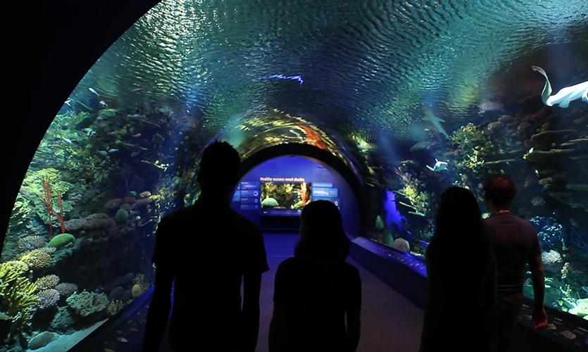 Ocean Wonders: Sharks! begins with a majestic trek through an immersive underwater Coral Reef Tunnel.