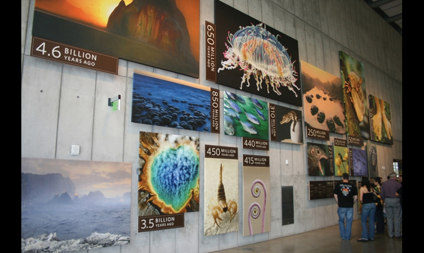 To provide a graphic overview of the evolution of the earth, a huge-scale photographic timeline at the new California Academy of Sciences uses inkjet prints of Franz Lanting's sensuous photographs labeled with simple datelines. (Design: Volume Inc. Fabrication: Cinnabar Inc.)
