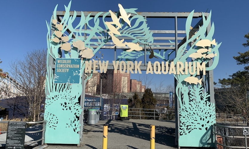The WCS oversees four zoos and an aquarium: the Bronx Zoo, Central Park Zoo, Queens Zoo, Prospect Park Zoo, and New York Aquarium.