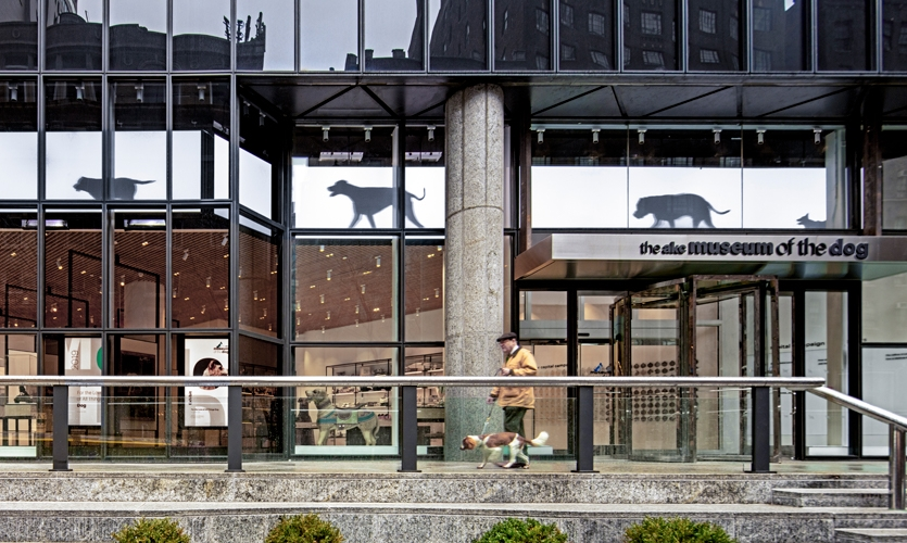 While the American Kennel Club originated in 1884 primarily as a registry for purebred dogs, the organization does much more today—furthering the well-being of dogs through educational and philanthropic efforts. (image: facade of building)