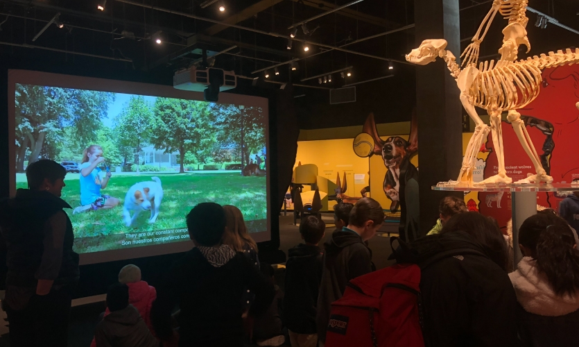 "The film is entitled ""From Predator to Pooch: Dog Evolution."" (image: visitors watch film in museum)"