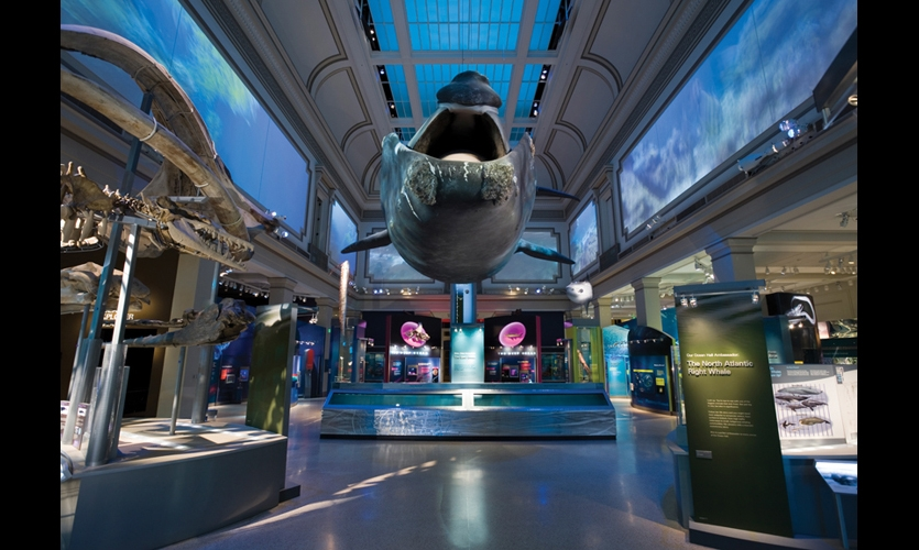 Sant Ocean Hall at the Smithsonian's National Museum of Natural History is vast, but not as vast as the underwater world that's the focus of Gallagher & Associates' new exhibit there. In one of the museum's original halls, restored to its 1914 grandeur, the exhibit captures the mystery and complexity of ocean life. (Photo: Jay Rosenblatt)