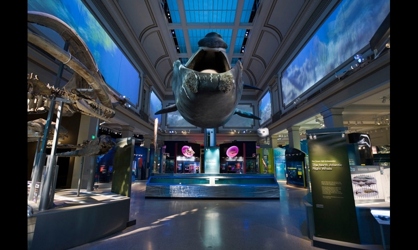 Gallagher and his team dramatized the immensity and diversity of Earth's final frontier in the Sant Ocean Hall at the Smithsonian National Museum of Natural History. (Photo: © Jay Rosenblatt)