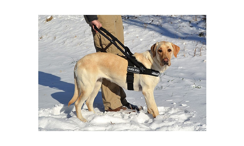 Dogs have been assisting people in need many different ways since at least 1927
