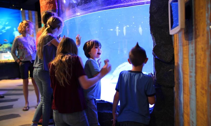 Turtle Rescue Center at SEALIFE Aquarium in Grapevine, Texas