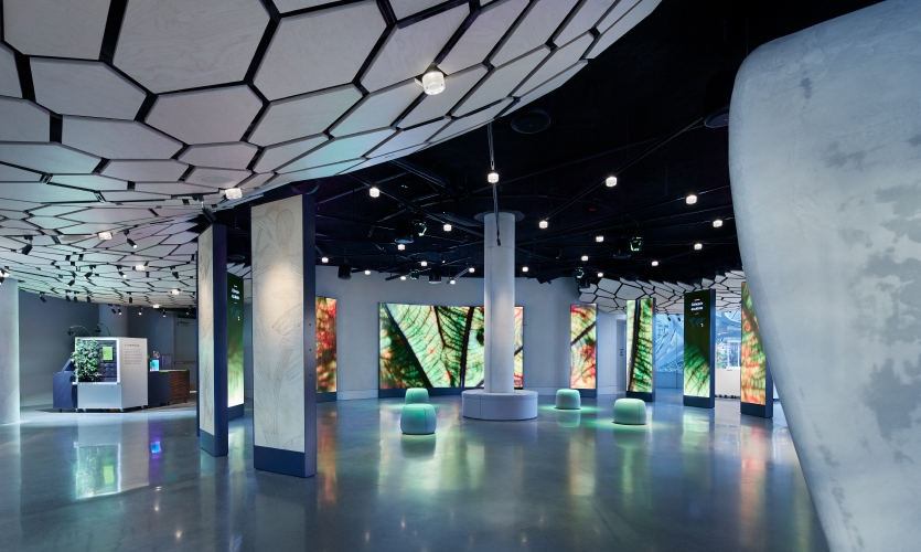 "The ""Spheres Immersion"" experience surrounds the visitor with stunning macro-footage of the world class plant collection in the Spheres."