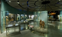 Central Rotunda, Hall of Human Origins, American Museum of Natural History