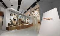 Exhibit Entrance, Wild: Amazing Animals in a Changing World, Melbourne Museum, MV Studios, Museum Victoria