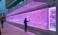 "The ""Pathways"" installation was designed by Studio SC in Seattle for the Allen Institute for Brain Science. The team was inspired by both the anatomy of the brain and the Allen Institute's use of technology."