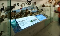 Interactive Display, Wild: Amazing Animals in a Changing World, Melbourne Museum, MV Studios, Museum Victoria