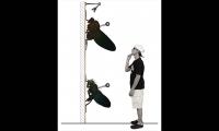 Wall-Mounted Display, Black Flys Concept Store, Jonathan Deepe