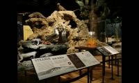 Darwin, American Museum of Natural History