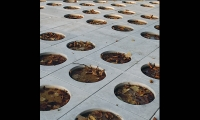 Holes Filled with Leaves, White Road: Waiting for the Rain, Mediterranean Sculpture Symposium, Studio Rašić