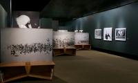 Exhibit Floor, Wild Birds of the American Wetlands, Utah Museum of Natural History, UMNH Exhibits Department