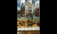 Display Case, Wild: Amazing Animals in a Changing World, Melbourne Museum, MV Studios, Museum Victoria