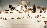 Animal Display, Wild: Amazing Animals in a Changing World, Melbourne Museum, MV Studios, Museum Victoria