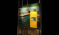 Music, Hall of Human Origins, American Museum of Natural History