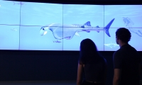A media wall developed by Unified Field, invites guests to explore 3D models and videos of sharks and rays.