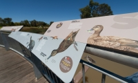 The interpretive panel educates visitors with the indicators of a healthy wetland ecosystem.