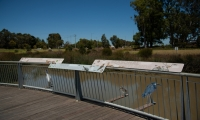 The interpretive solution wraps around the curved banister to tie seamlessly into the boardwalk and environment.