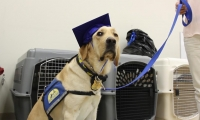 Partners with Paws, is a documentary shot, edited and produced by Unified Field that chronicles the work of Canine Companions for Independence, the nation's largest provider of service dogs. (image: dog in graduation cap)