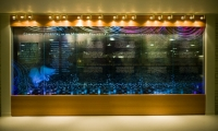 The LED light system changes colors slowly throughout the day with shifting natural light.