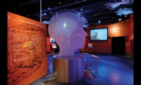 At the Language Karoake station, guests choose a language and a country location, then try to speak the language using a video prompt. The video is composited using green-screen technology and played back in fun and unexpected ways. The brain sculpture lights up when guests using touch screens discover the regions of the brain where communication signals are sent, received, and interpreted.