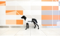 An unexpected dog poses in front of Friday's patterns at the Milaneo Stuttgart project.  (photo: Samuel Jurcic Photography)
