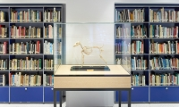 The team's creative approach extended to the AKC Resource Center—a library holding hundreds of canine-focused reference books. (image: dog skeleton in vitrine and books)